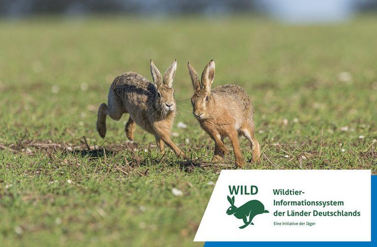 Wildtier-Informationssystems der Länder Deutschlands