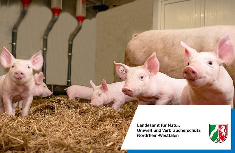 NRW setzt beim Thema Tiergesundheit auf Cadenza